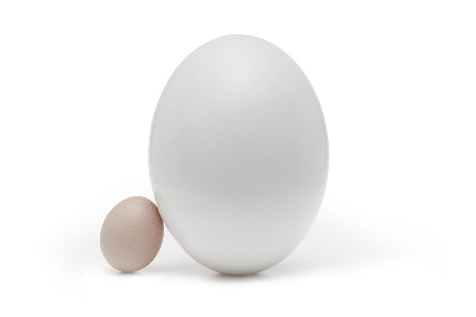 En bild av två olika stora ägg som symboliserar Rumblines olika stora kunder